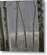 Aspen Stand In A Snowstorm Metal Print