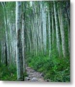 Aspen Trails  Metal Print