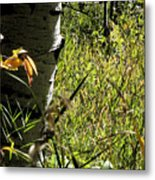 Aspen Tree With Grasses Metal Print