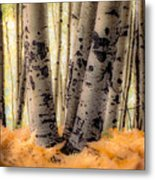Aspen Trees With Ferns Metal Print
