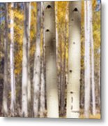 Aspen Trunks Metal Print