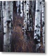 Aspen View 2 Metal Print