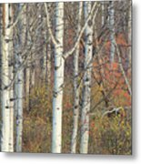 Aspens At Dusk Metal Print