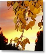 Aspens At Sunset Metal Print