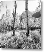 Aspens Black And White Metal Print