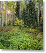 Aspens In Autumn 5 - Santa Fe National Forest New Mexico Metal Print