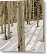 Aspens In Winter 2 Panorama - Santa Fe National Forest New Mexico Metal Print