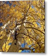 Aspen's Reaching  Metal Print