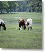 Assateague Island - Wild Ponies And Their Buddies  Metal Print