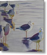 Assorted Gulls Metal Print