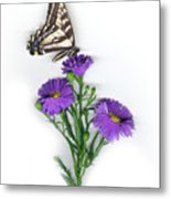 Aster And Butterfly Metal Print