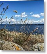 At Point Lawrence Metal Print
