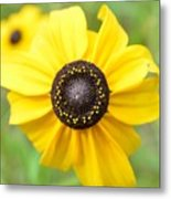 At The Center Of A Flower Metal Print