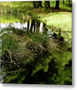 At The Edge Of The Forest Pond. Metal Print
