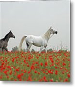 At The Poppies' Field... Metal Print
