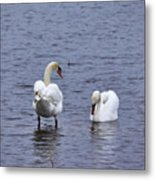 At Your Service. Mute Swan Metal Print