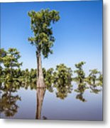 Atchafalaya Cypress Tree Metal Print