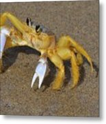 An Atlantic Ghost Crab Playing In The Tide 3 Metal Print