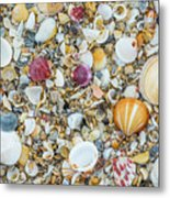 Atlantic' Shells Color Metal Print
