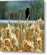 Atop The Cattails Metal Print