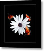 Attraction Metal Print