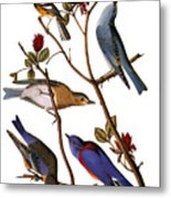 Audubon: Bluebirds Metal Print