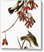 Audubon: Bobolink Metal Print