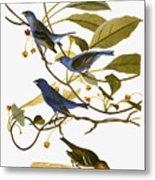 Audubon: Bunting, 1827-38 Metal Print
