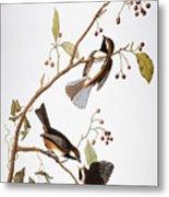 Audubon: Chickadee, (1827-1838) Metal Print