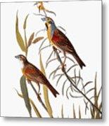 Audubon: Dickcissel Metal Print