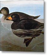 Audubon: Duck, 1827 Metal Print