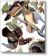Audubon: Duck Metal Print