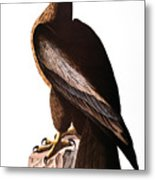 Audubon: Eagle Metal Print