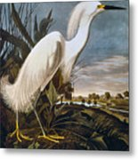 Audubon: Egret Metal Print