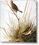 Audubon: Finch Metal Print