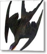 Audubon: Frigatebird Metal Print