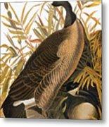 Audubon: Goose Metal Print