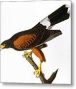 Audubon: Hawk, 1827 Metal Print