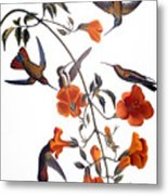 Audubon: Hummingbird Metal Print by Granger