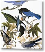 Audubon: Jay And Magpie Metal Print