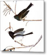 Audubon: Junco, (1827) Metal Print