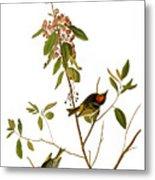 Audubon: Kinglet, 1827 Metal Print