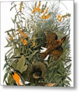 Audubon: Meadowlark Metal Print