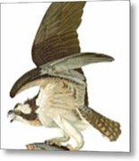 Audubon: Osprey Metal Print