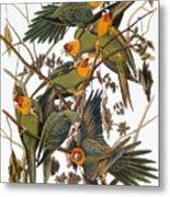 Audubon: Parakeet Metal Print