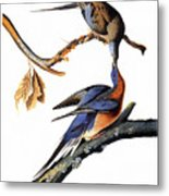Audubon: Passenger Pigeon Metal Print
