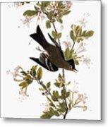 Audubon: Pewee, 1827-38 Metal Print