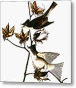 Audubon: Phoebe Metal Print
