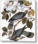 Audubon: Pigeon Metal Print