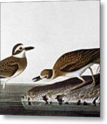 Audubon: Plover, 1827-38 Metal Print